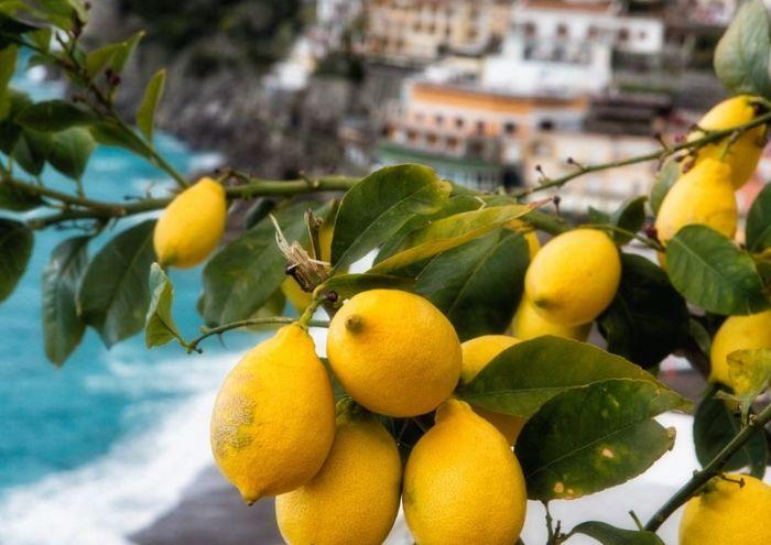лимоны для лимончелло